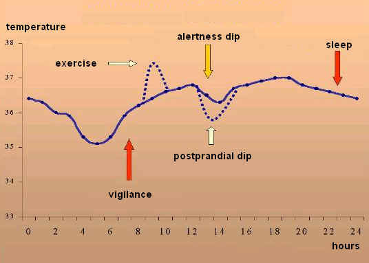 Temperature changes in the course of the day in degrees centigrade (courtesy of: Prof. Luiz Menna-Barreto, State University of Campinas, Brazil)