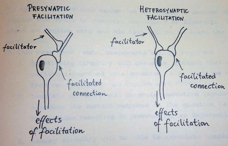 Configurations involved in presynaptic and heterosynaptic facilitation